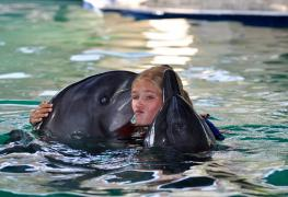 Lovina, swimming with dolphins