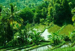 Munduk Bali hiking tour