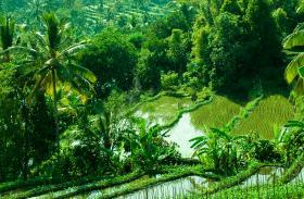 Munduk Bali rice field